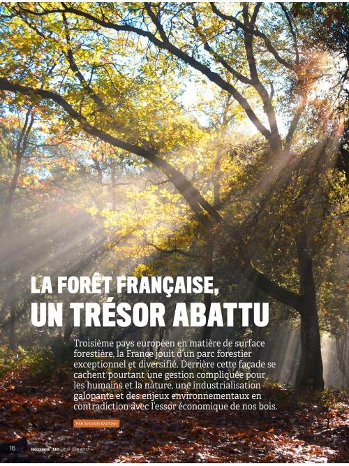 NEX110 Forêt française un trésor abattu - 1